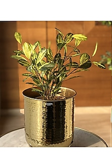 Gold Safi Planter by Mason Homes