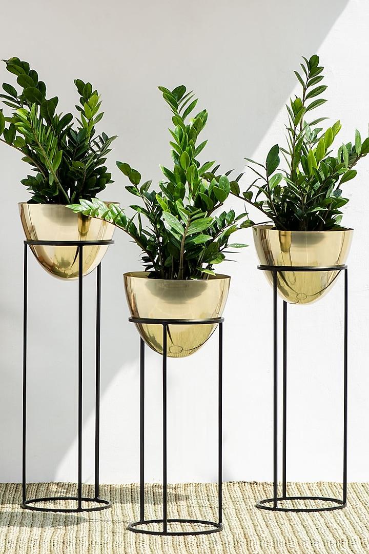 Handmade Shiny Gold & Black Ovate Iron Planter (Set Of 3) by The Decor Remedy
